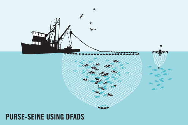 What are ghost nets olive ridley project for Purse seine fishing