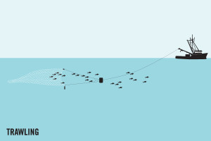 Fishing by trawling graphic