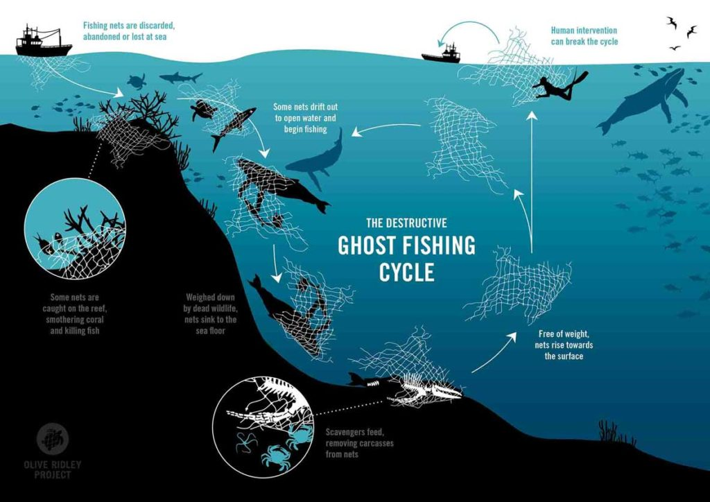 Graphic describing the ghost fishing cycle