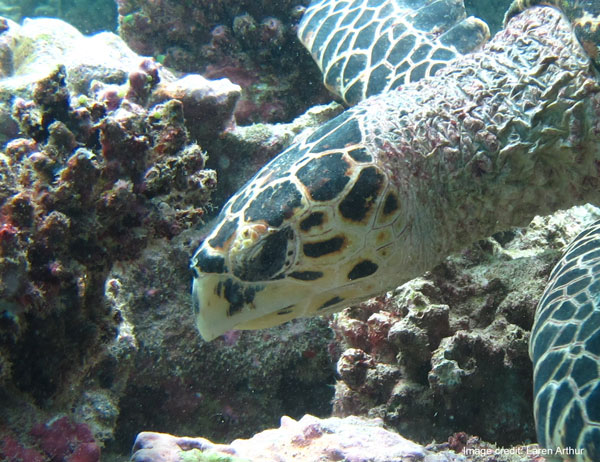 Turtle-ID – How To ID A Turtle?