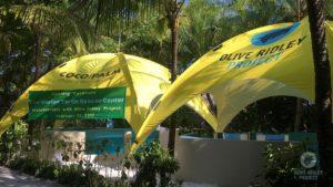 Olive Ridley Project Marine Turtle Rescue Centre Maldives