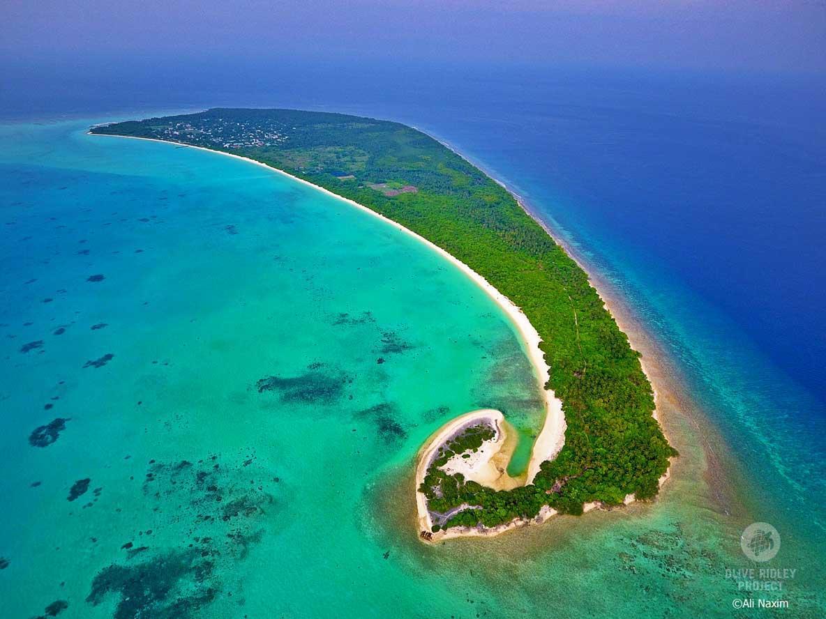 Sea Turtle Volunteer Programs Maldives