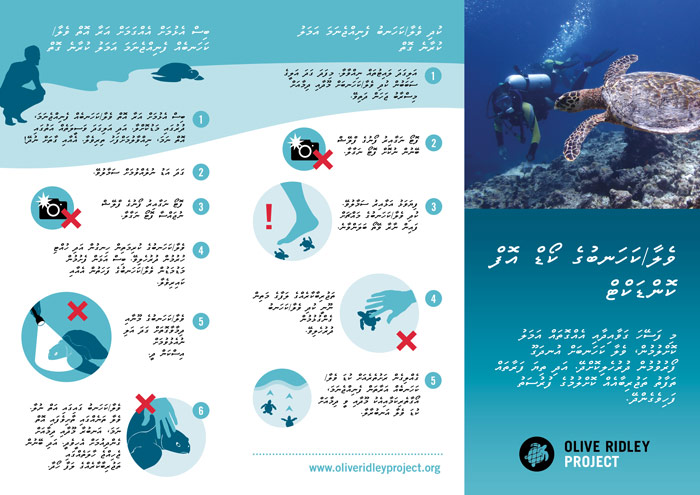 Sea Turtle Code of Conduct Dhivehi PDF. Infographic.