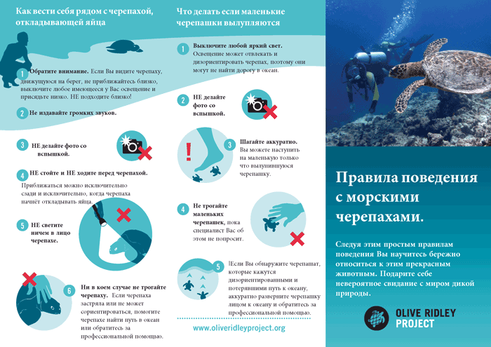 Sea Turtle Code of Conduct, Russian PDF Infographic.