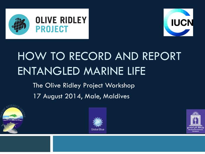 Entangled Marine Life Workshop. Infographic.