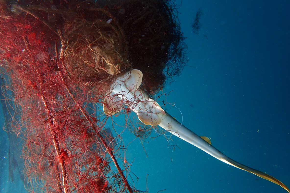 Underwater image of ghost net with dead shark Pakistan