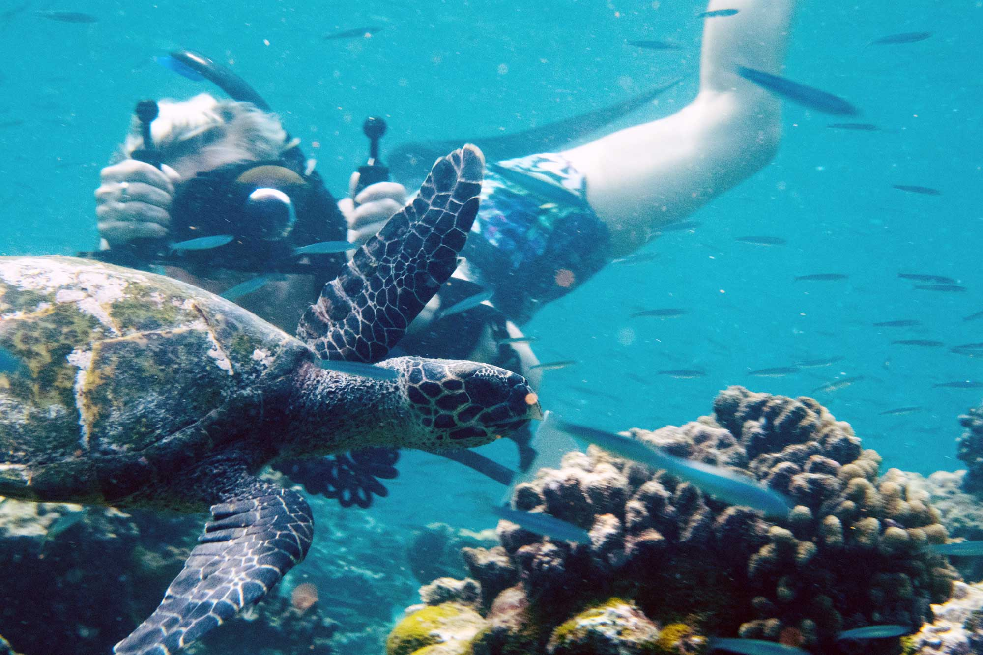 Turtle photo-id Maldives