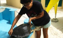 ORP Volunteer Parkriti Mittal caring for Beyonce the turtle