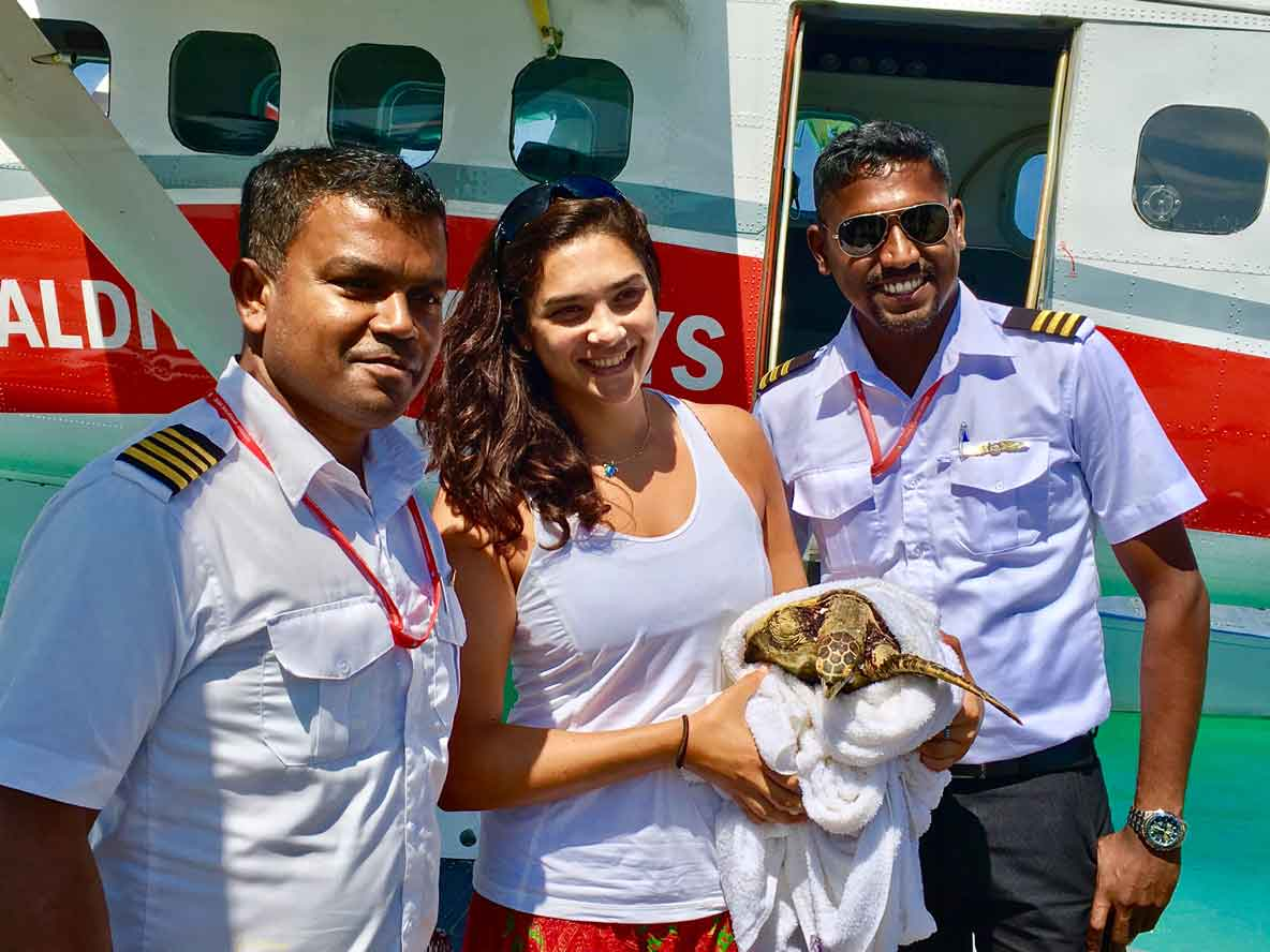 Injured turtle ready to board MTA sea plane for transport to Marine Turtle Rescue Centre Maldives