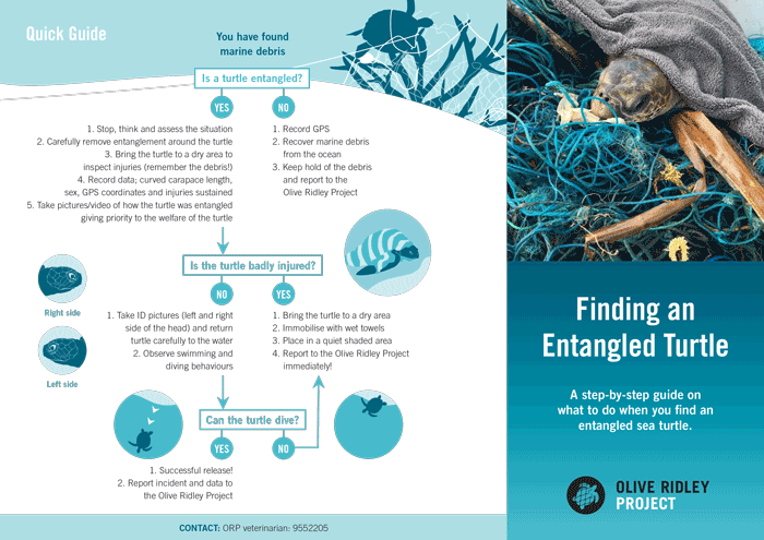 ORP Turtle Entanglement Protocol. English. PDF Infographic.