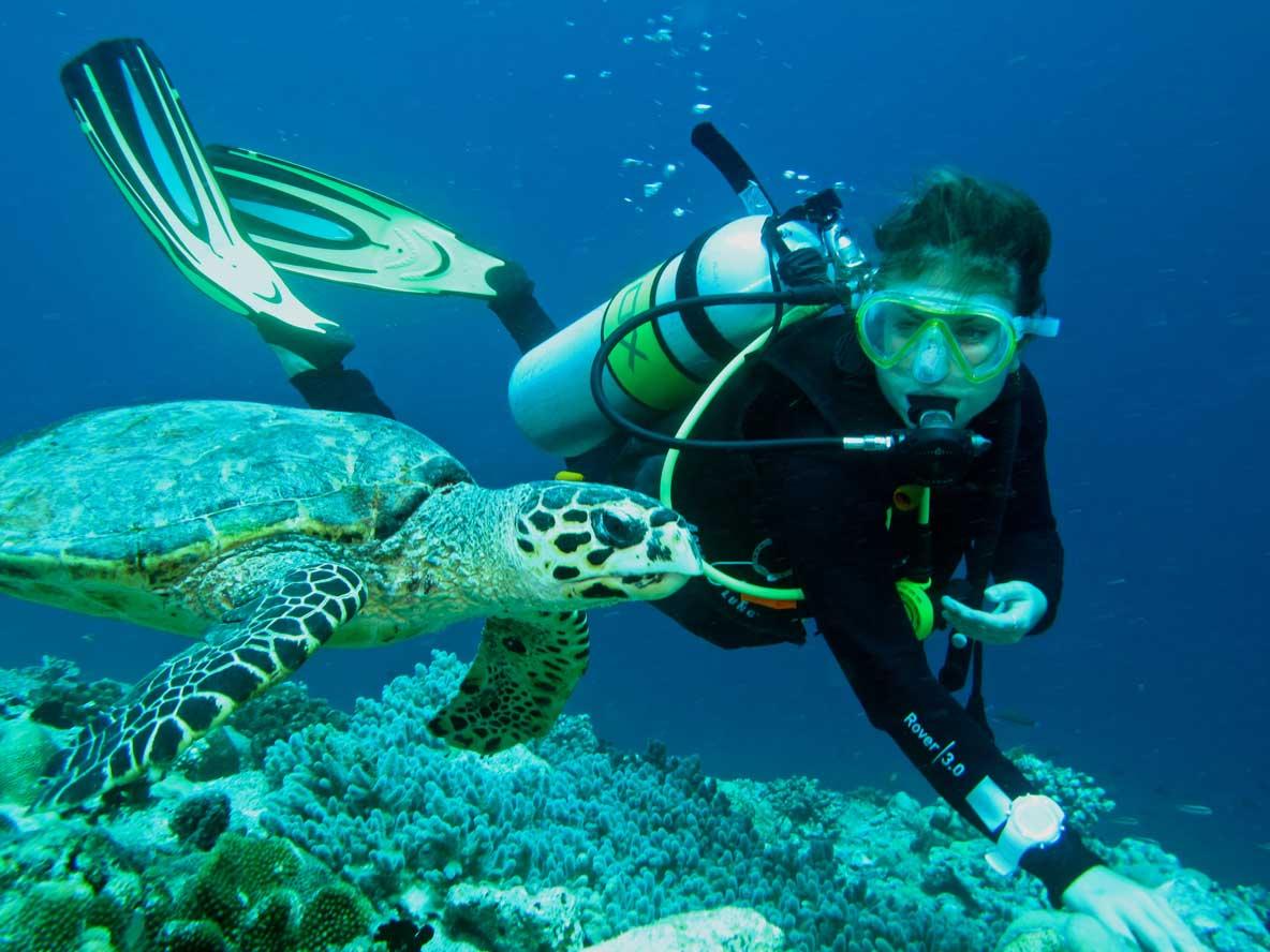 Diver swimming with hawksbill turtle Maldives
