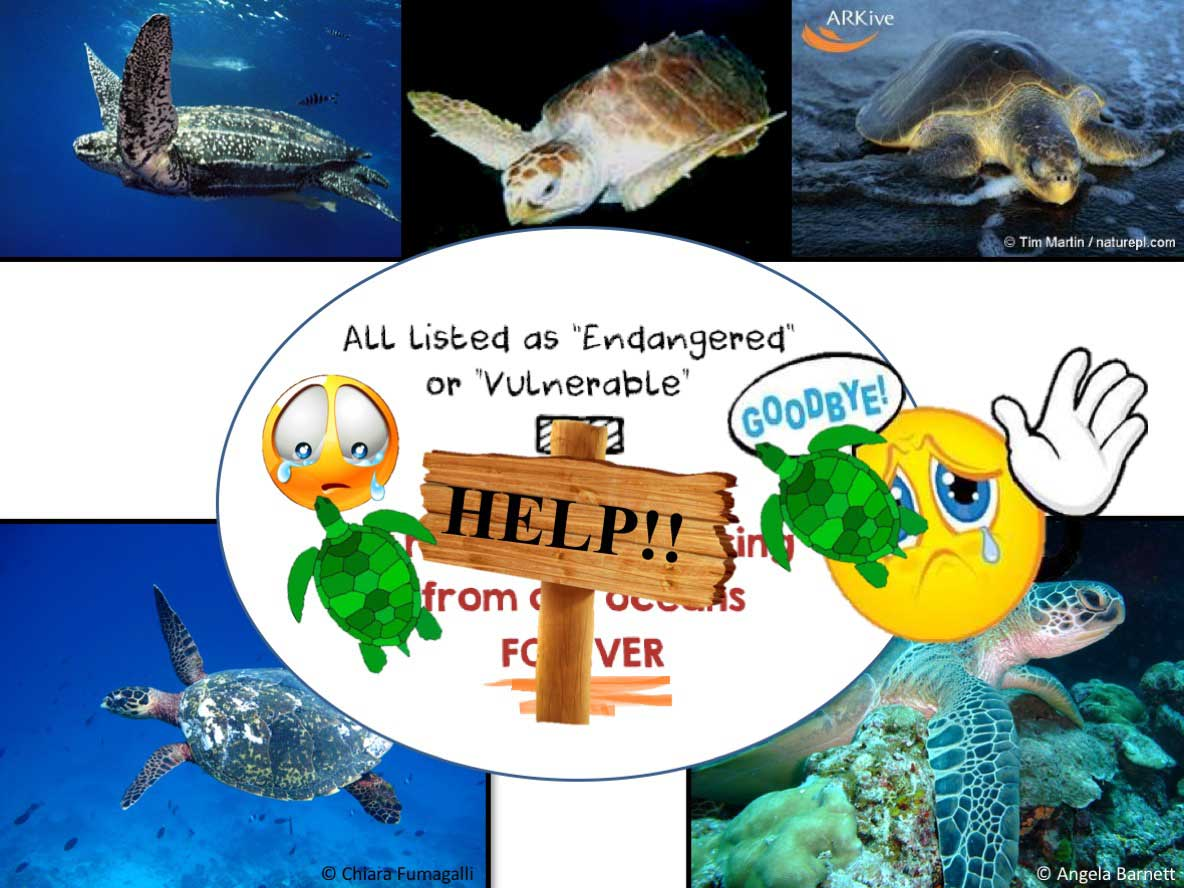 Slide from turtle presentation for Dhuni Kolhu Children