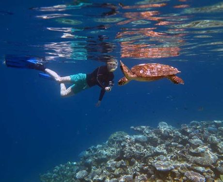 Ghost Gear Research & Sea Turtle Monitoring