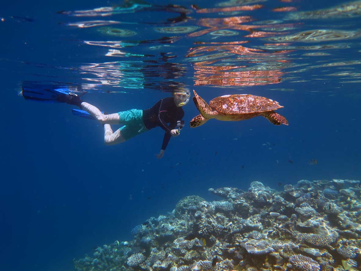 Snorkler taking photo of hawksbill turtle for ORP Turtle Photo-ID Maldives