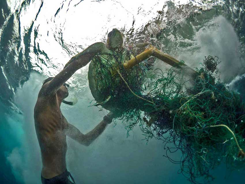 Snorkeler freeing an Olive ridley turtle from a ghost net in Maldives