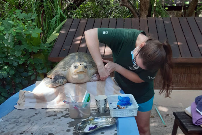 Dr Minnie giving Heidi spa treatment. Image.