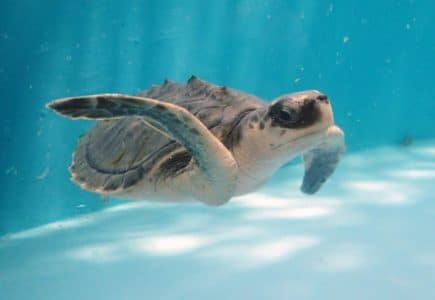 Marine Turtle Rescue Centre