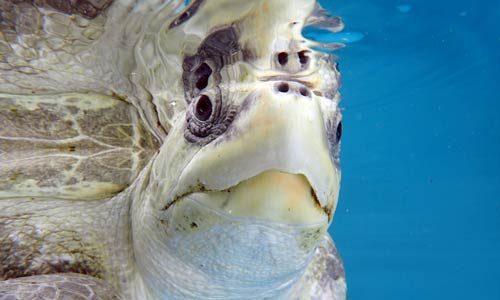 Turtle Patients