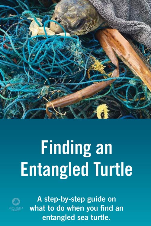Turtle Entanglement Protocol PDF
