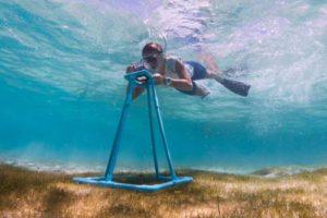 MUI team member monitoring sea grass levels in Laamu Atoll, Maldives. Underwater photo