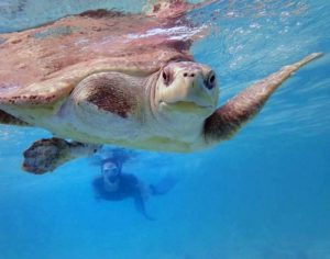 Turtle Vet Claire and turtle patient Penny taking a swim in the ocean