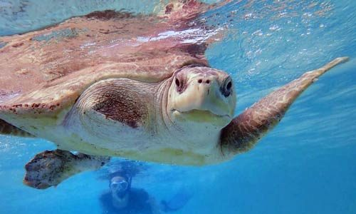 Life As a Sea Turtle Vet