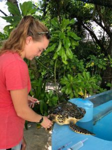 Dr Claire giving turtle patient Dhooni an injection ORP Rescue Centre Maldives