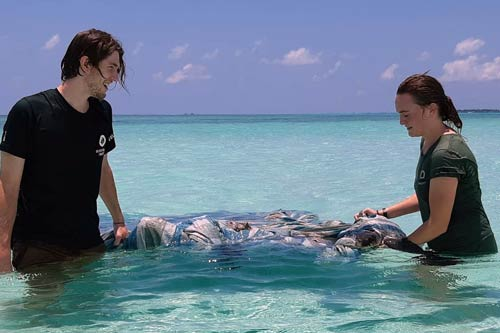 Brian and Dr Claire rescuing a turtle entangled in tarpaulin, Maldives