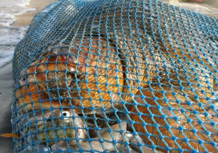 Effects of Bycatch From Fishing