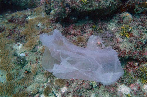 A plastic bag on a coral reef in Kenya