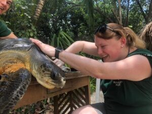 Visiting veterinarian Sonya Miles providing wound care to a turtle patient
