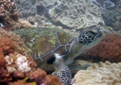 Name And Adopt A Turtle In Kenya