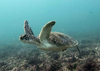 Meet Our Adopted Sea Turtles in Kenya