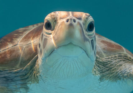 ORP Turtle Patient Update Issue 16|2019