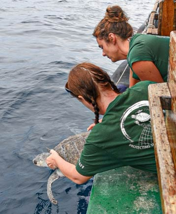 Turtle patient Orla being released