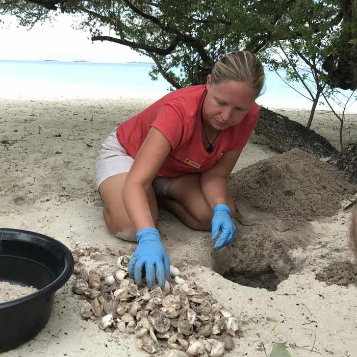 Women in science: Dr. Stephanie Kohnk excavating a hatched turtle nest in Maldives to check the hatching success rate.