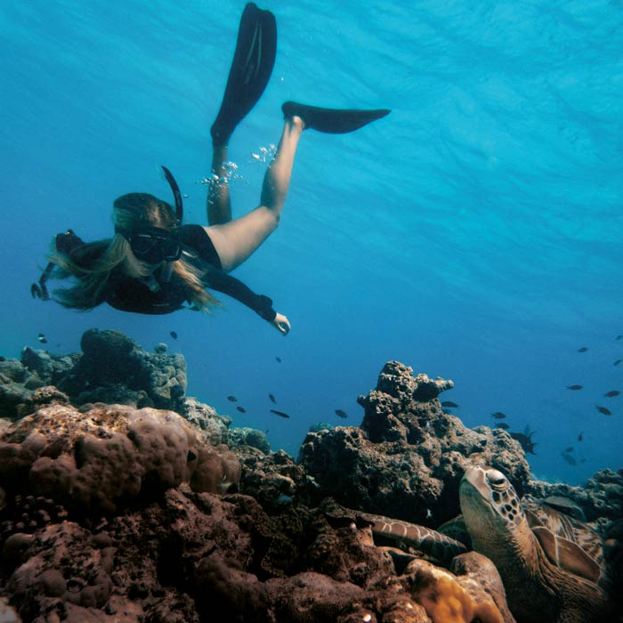 Women in science: Kristina Loosen studying a green turtle in Maldives whilst free-diving.