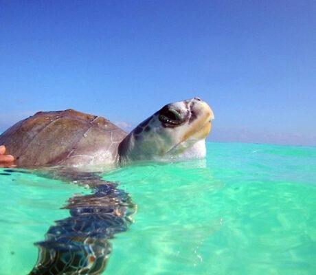 Meet Our Turtle Patients