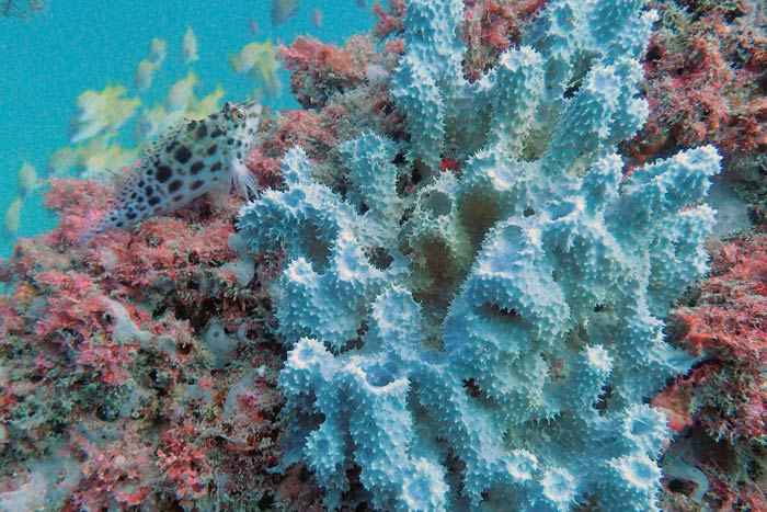 Sponges are are a major part of hawksbill turtles' diet. Image.