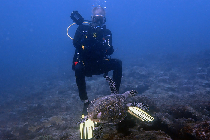 Diver and hawksbill. Turtle photo-ID research in progress in Diani Beach, Kenya. Image.
