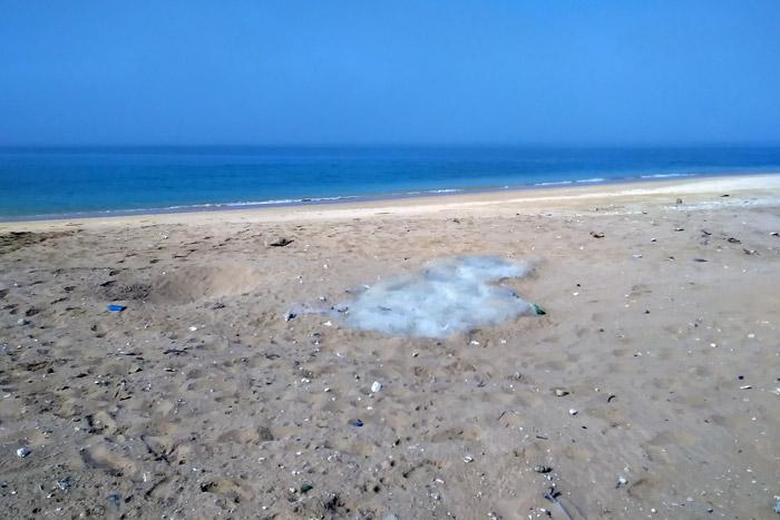 Ghost net littering the north beach on Astola Island. Image.