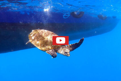 ORP Turtle Patient Update Issue 3   2021