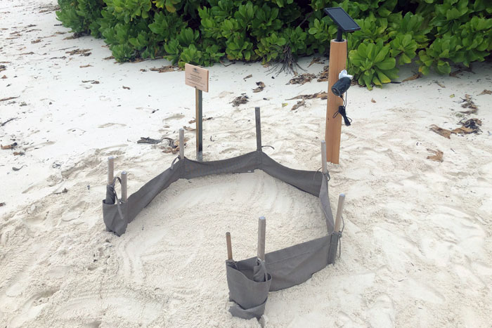 A protected sea turle nest at Six Senses Laamu, Maldives. Image.