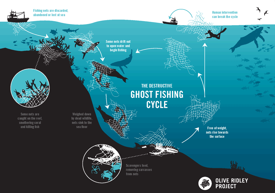 The destructive ghost fishing cycle inphographic.
