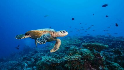 Vacancies – Work With The Olive Ridley Project