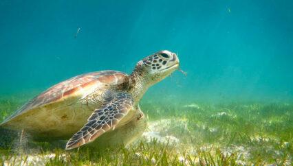 Vacancy: Sea Turtle Biologist, Seychelles