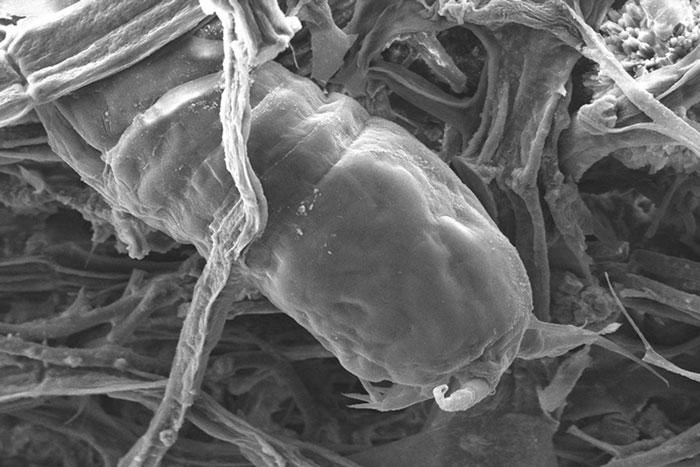 Unidentified vertebrate on ghost net. Image.