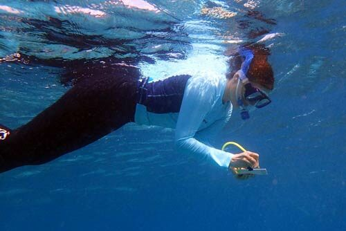 Sea turtle research expedition survey in progress