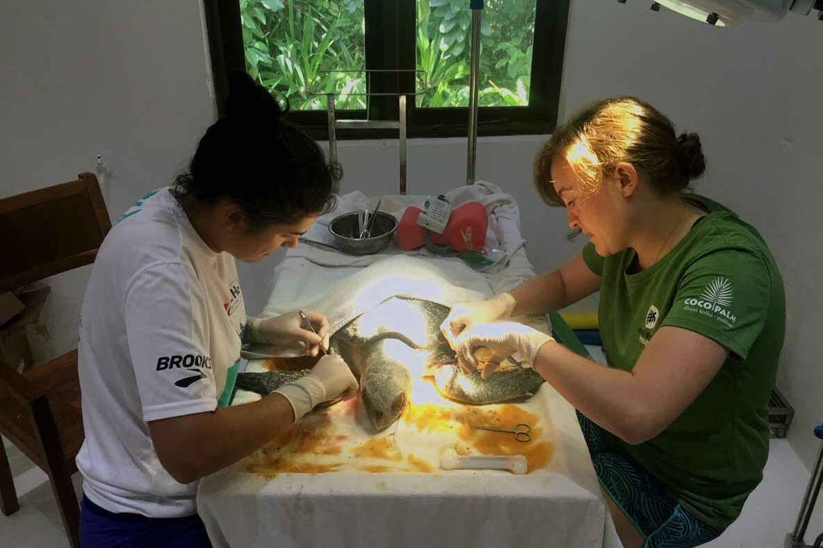 Resident turtle vets performing suregery on rescued turtle