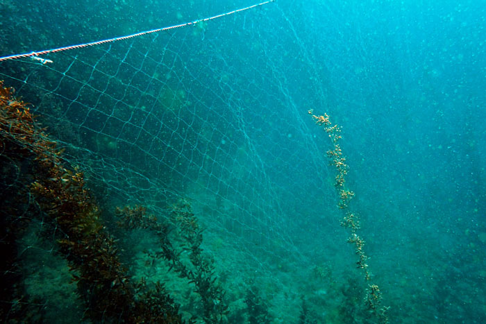 Cryptic ghost gear at the sea bottom. Image.